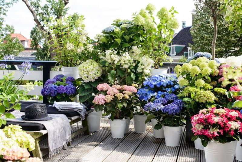 Slaapkamer slaapkamer verlichting tips : Buitenleven : Hortensia - Tuinplant van de Maand u2022 Stijlvol Styling ...