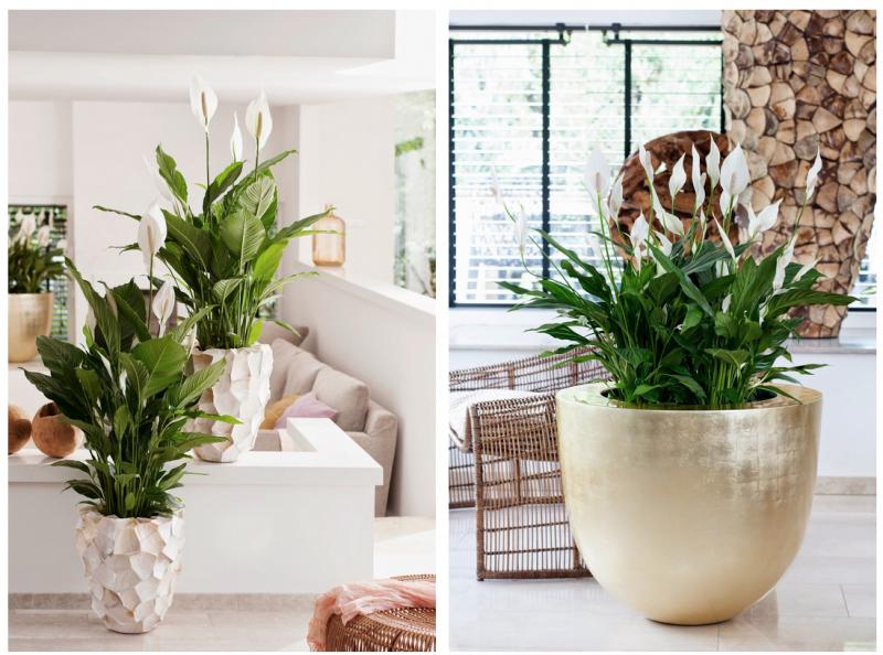 Groen wonen eco luxe planten bloemen trend 2015 nr 2 stijlvol styling woonblog - Moderne appartement decoratie ...